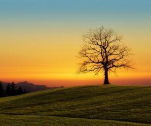 Rüyada Ağaç Görmek Enteresan Anlamlar Taşıyor, Şaşıracaksınız!