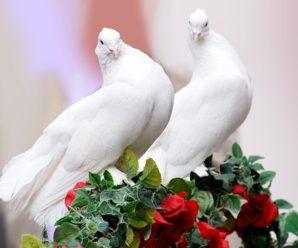 Rüyada Güvercin Görmek Her Zaman Müjde Anlamına mı Gelir?