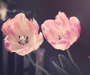 Rüyada Çiçek Görmek Enteresan Gelişmelere İşaret Eder, Şaşıracaksınız!